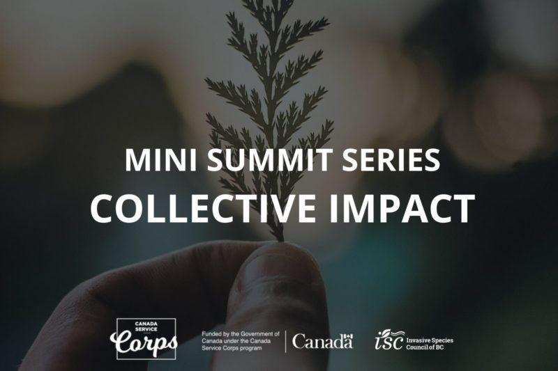 Mini Summit Series: Unlocking Community Potential Through Collective Impact
