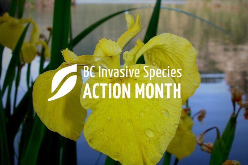 ISAM: Invasive Plant ID and Management Workshop