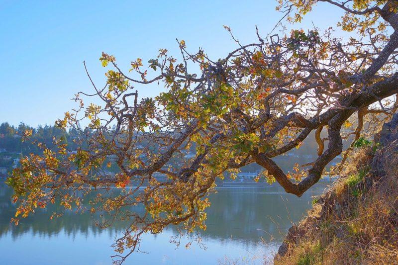 Volunteer Spotlight: Garry Oak Meadow Restoration