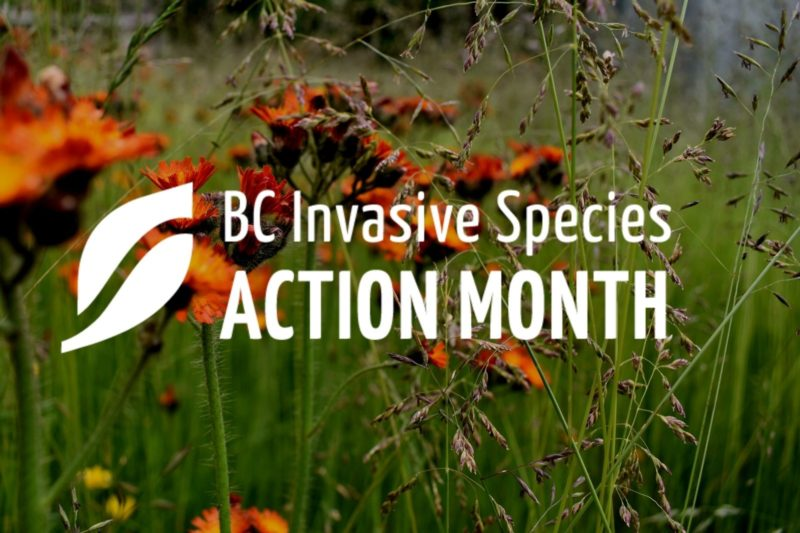 May is Officially Invasive Species Action Month in British Columbia