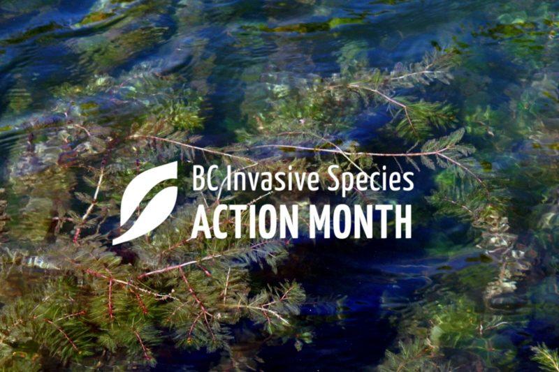 ISAM: Aquatic Invasives 101