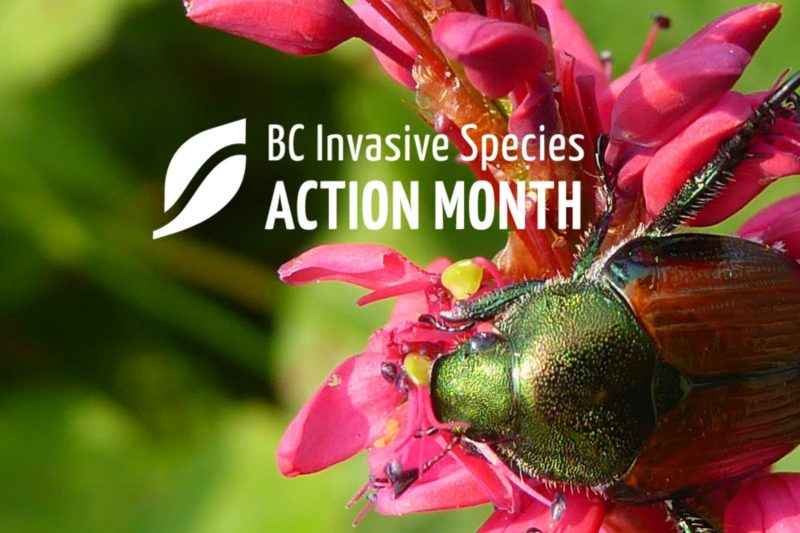 ISAM: Collaborative Eradication Response to Japanese Beetle in BC Webinar