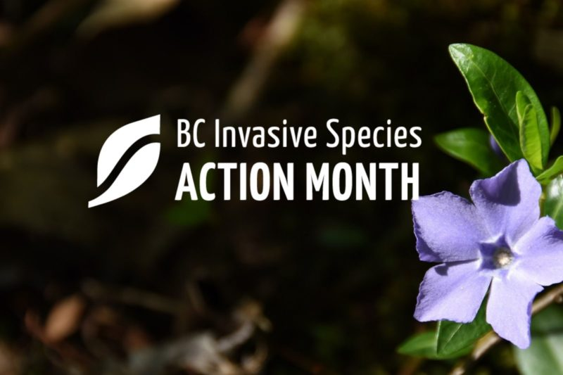 ISAM: Invasive Plant Species of BC Identification Workshop