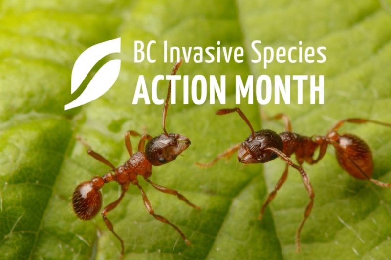 ISAM: Put the Cool on Fire Ants Webinar