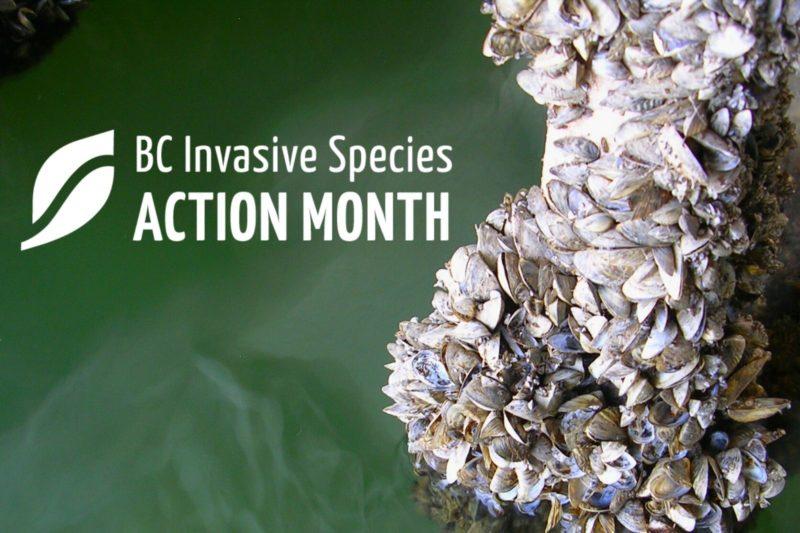 ISAM: BC Invasive Mussel Defence Program Webinar