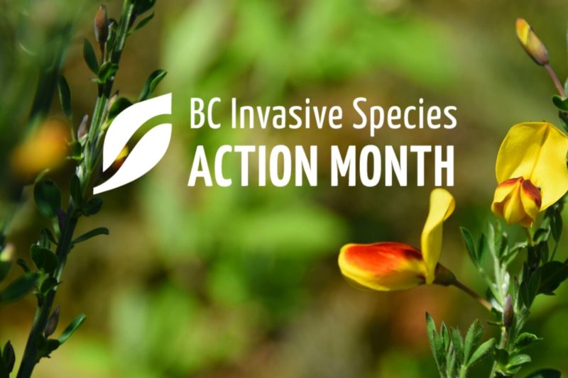 ISAM: Nanaimo Invasive Plant Work Parties