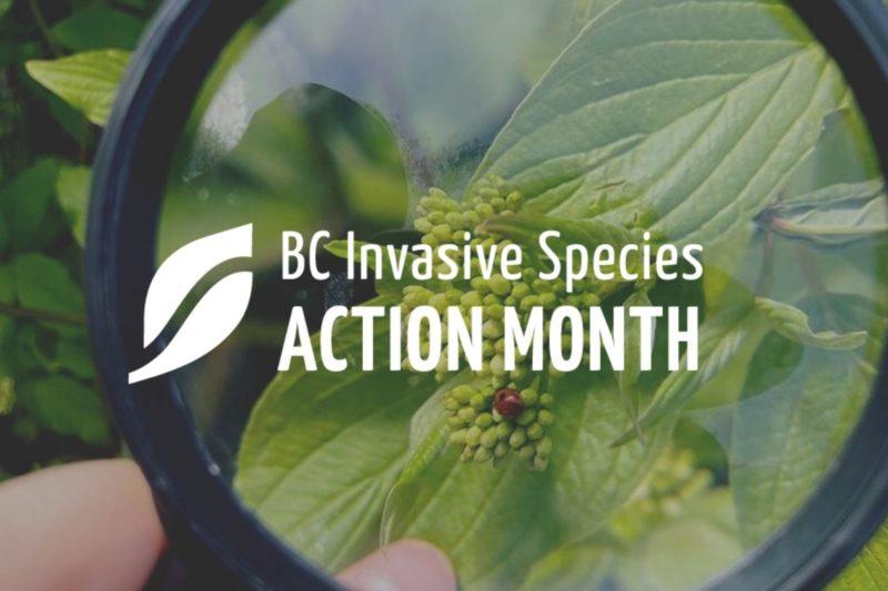 Celebrating Invasive Species Action Month