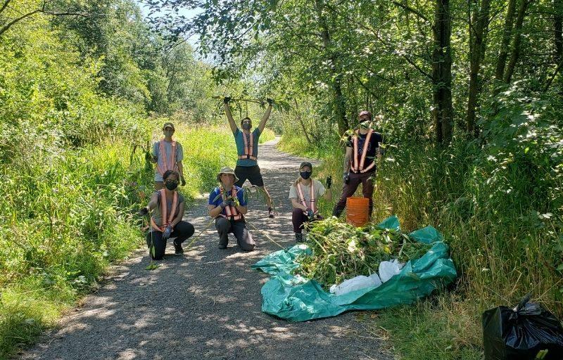 Volunteers Protecting Lower Cougar Creek From Invasives