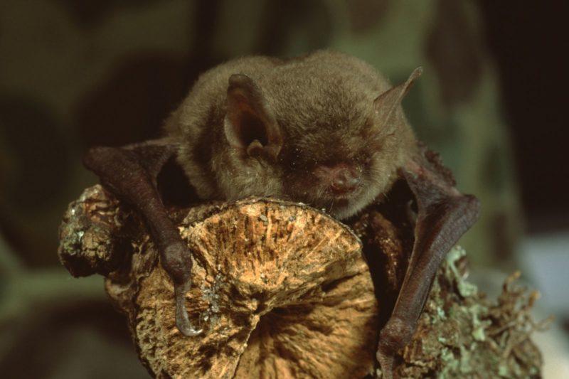 Deadly Disease Spreading in Washington Bat Populations