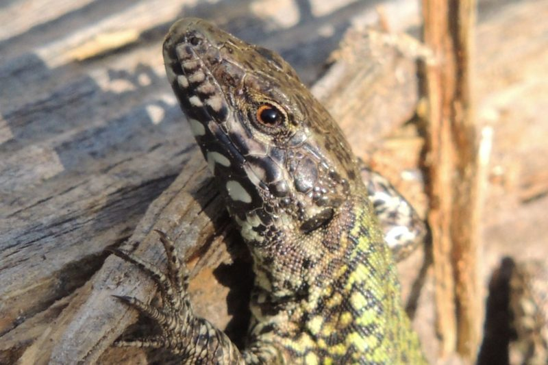 What's New with Invasive Species in the CRD?
